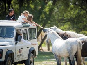 Camargue jeep safari - Camargue Autrement